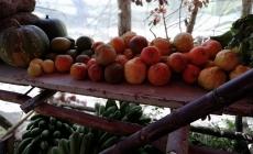 DÍA DEL AGRICULTOR ENCUENTRA PRODUCTORES EN SITUACIONES DIFÍCIL