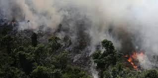 LOS FOCOS DE INCENDIOS EN LA AMAZONIA SUPERAN LOS 70 MIL